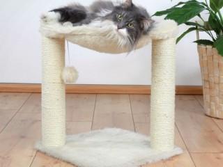 Recherche arbre à chat